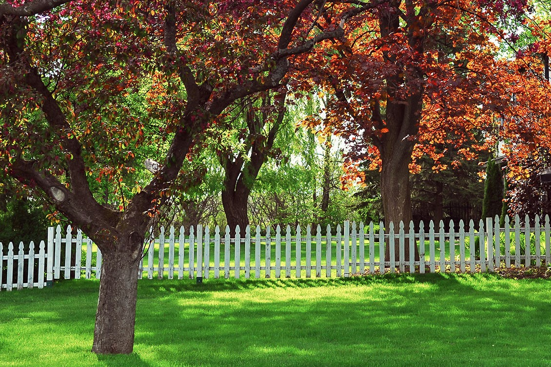 A tree on one side of a white picket fence and a tree on the other side. The leaves are autumn shades of orange and red with green grass below.